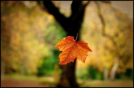 falling-leaf-for-blog