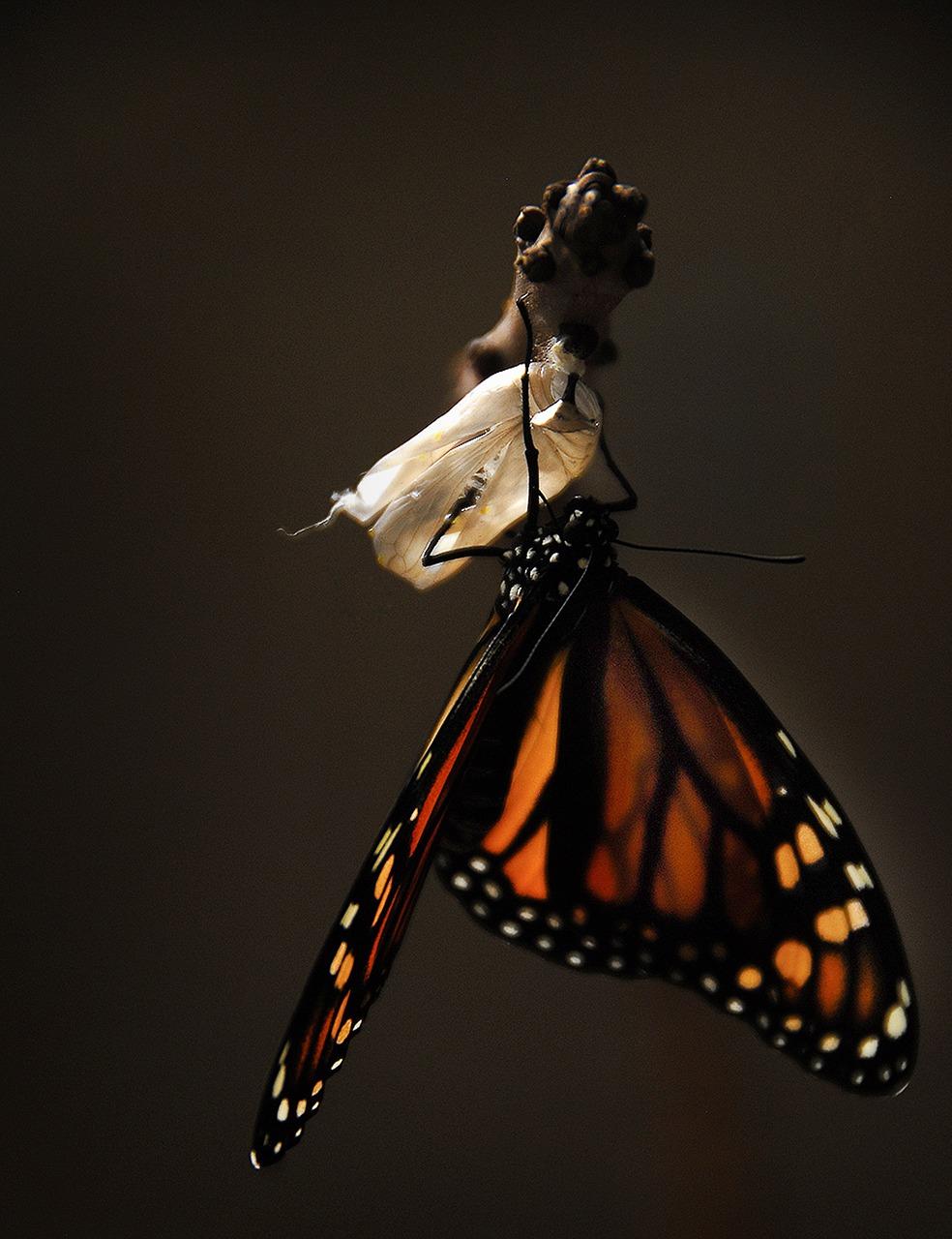 butterfly-1518060_1280